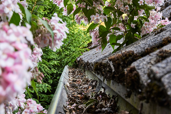 Clean gutters for diy maintenance