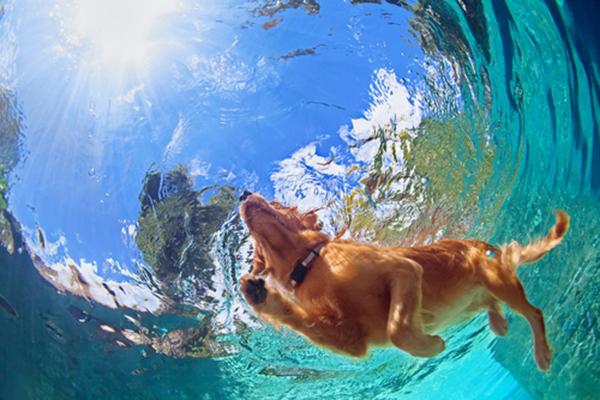 Dog hair in pool