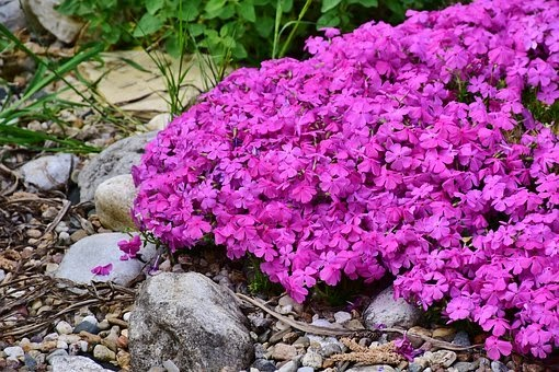 Flower ground covers