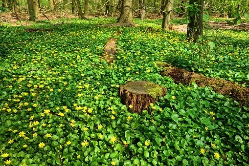 Ground covers for your yard