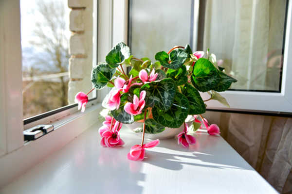 houseplants that are easy to care for