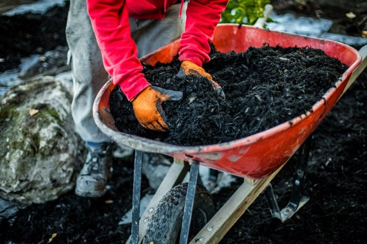 Using a wheelbarrow for mulch and landscaping