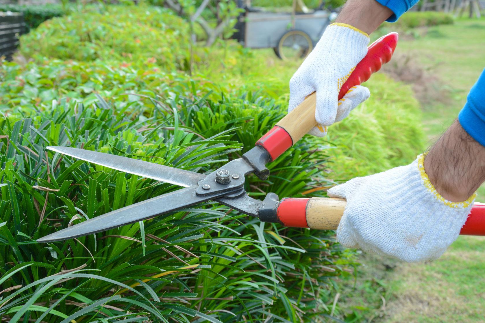 shears tools garden