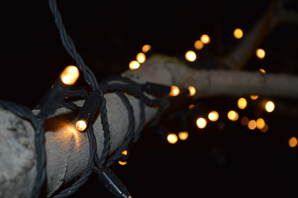 Christmas lights wrapped around tree brand