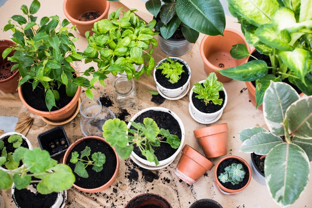 Tip:The Better-Late-Than-Never Garden