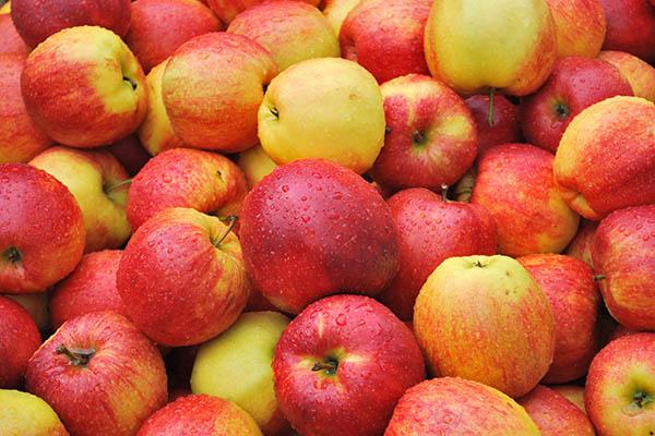 In-Season Gala Apples
