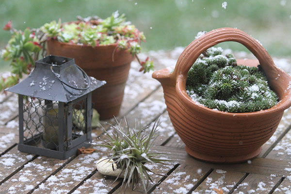 Stone Plant Containers for Winter Gardens