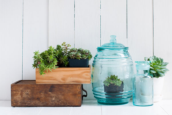 Indoor plants in glass containers