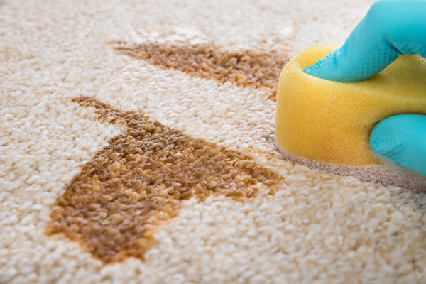Person Cleaning a Carpet Stain with Diy Floor Cleaner