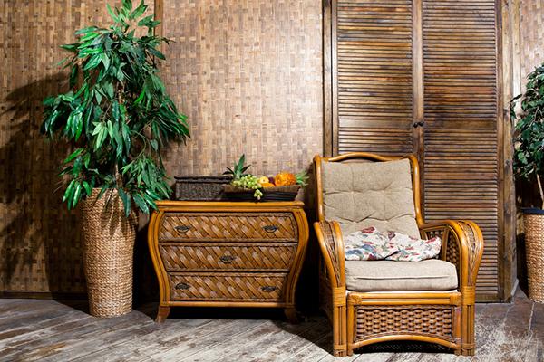 indoor Wicker Furniture Next to Ficus